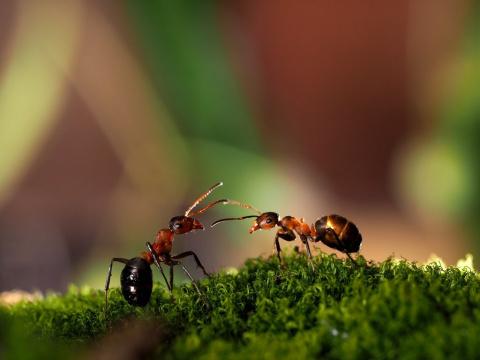 Дача Что делать с огромным муравейником на даче. Пожалуйста помогите.