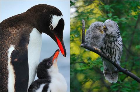 Мир заботливых птиц: 20 ярки…