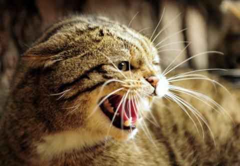 Влияние полтергейста на животных