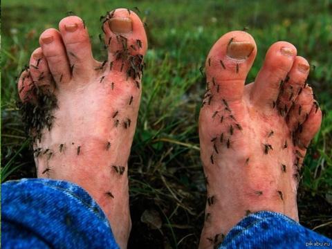 Как летом на даче спастись от насекомых. Делаем плетень на даче!(подробная инструкция)