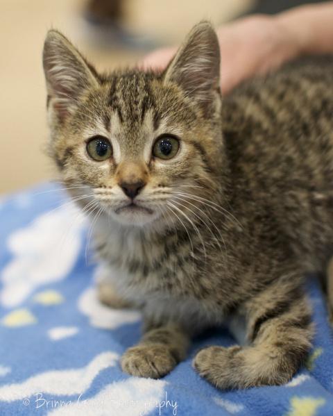 Этому необычному котенку повезло встретить любящее сердце