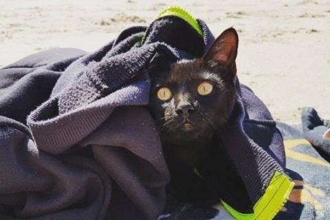 Кошка, спасенная семейной парой, оказалась любительницей плавать))