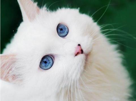 Кошки – это самые магические…
