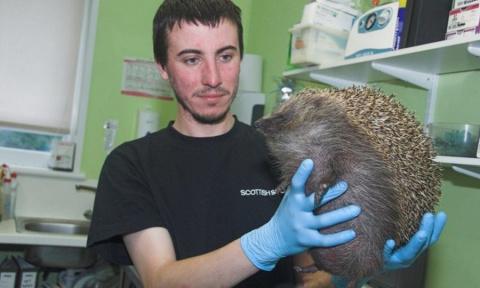 Ветеринары Шотландии спасли …