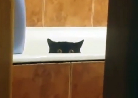 Кот украл свежую рыбу с кухо…