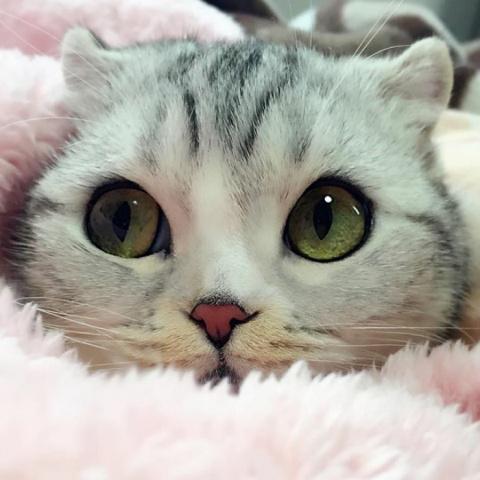 Хана — обворожительная кошка…