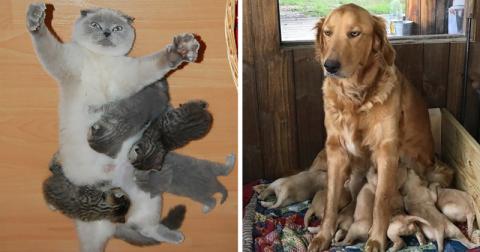 33 фотографии животных о том…