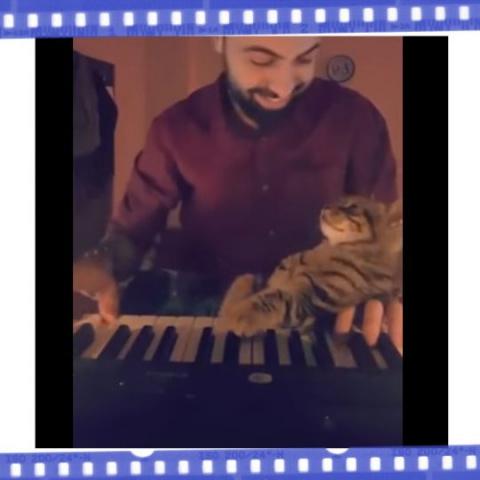 Турецкая кошка покорила сеть…