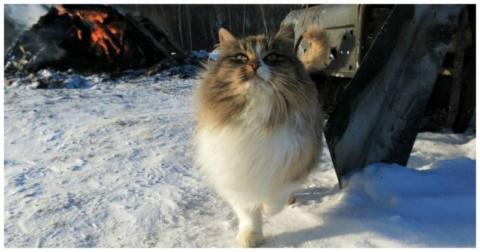 Кошки - победители по жизни