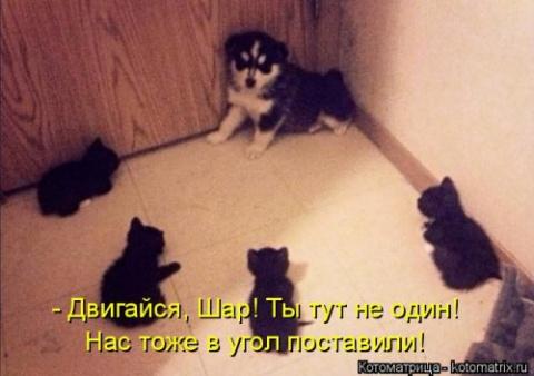 Прикольная подборка котоматриц))