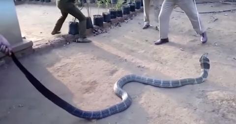 Ядовитая змея пробралась в п…