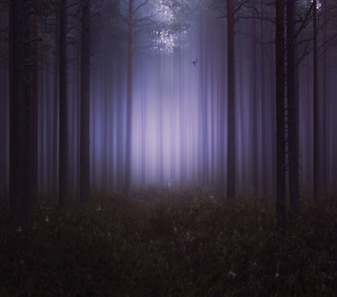 На край ночи за тишиной. Фот…