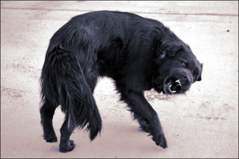 Бешеный пес - судьба дворняги