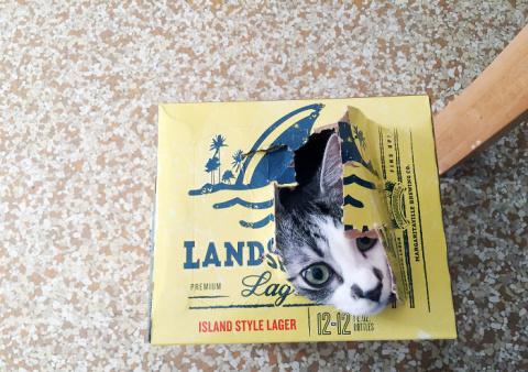 Если кошка видит место, в ко…