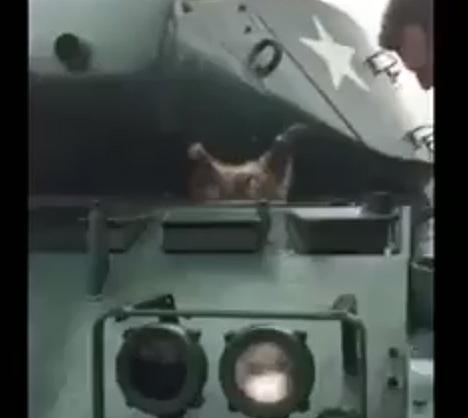 В это сложно поверить! Енот застрял головой в танке