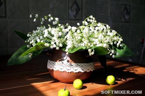 Цветы, которые лучше никому …