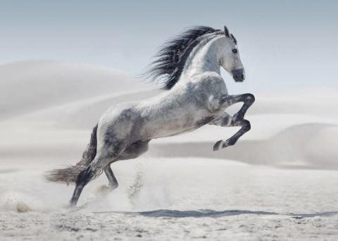Все великолепие лошадей на ф…