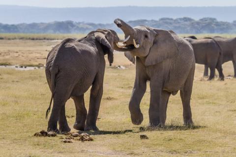 Как общаются животные между собой