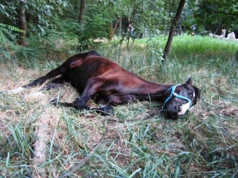 Хозяин не смог объяснить, зачем он бросил коня, привязав его в лесу без еды и воды…