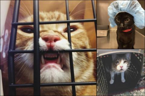 Котики, которых подло предали