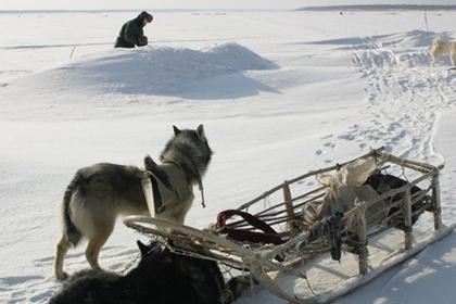 Собака застрелила охотника в…