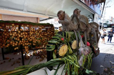 Шведский стол для обезьян