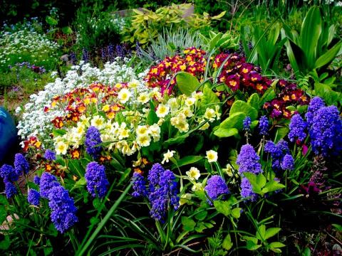 Неприхотливые многолетники для вашего сада. Совместимость культур на огороде