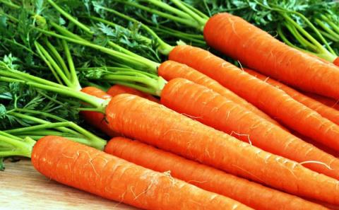Болезни и вредители моркови — как распознать и избавиться