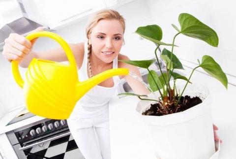 Как правильно подкармливать цветы