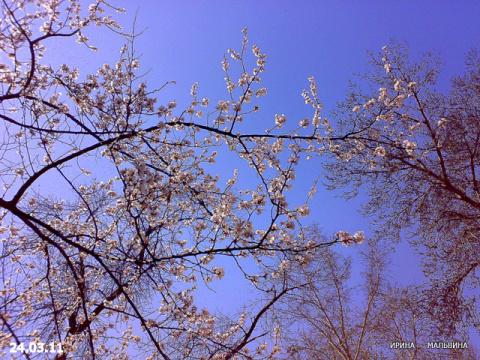 Весна пришла!!!!