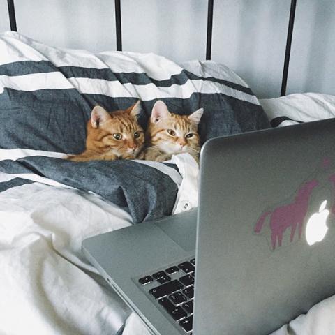 Что такое кошачья любовь?