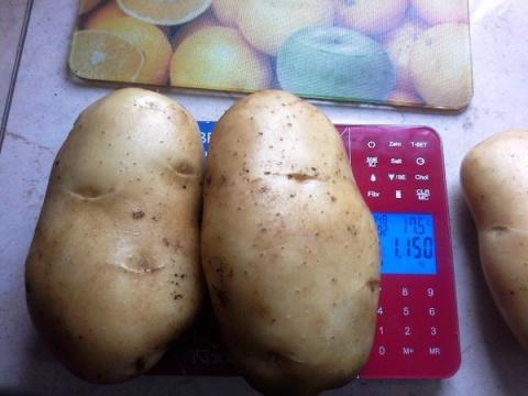 Непредсказуемая картошка, или И опытные ошибаются...