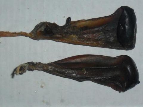 Псориаз на голове лечение касторовым маслом - Псориаз. Лечение