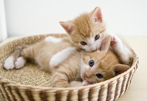 Позитивные котята для улыбки…