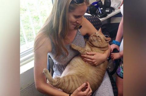 Кот весом 15 кг нашел новую семью