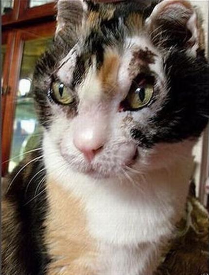 Скарлетт — кошка века