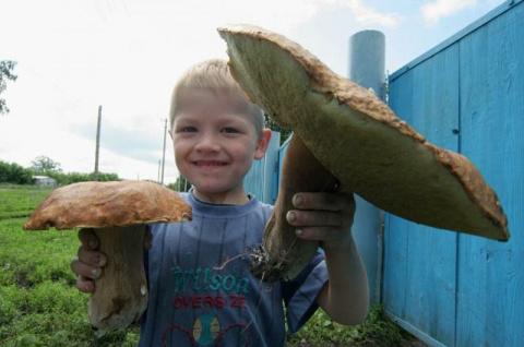 Если гриб оказался вдруг…Что делать при отравлении дарами леса?