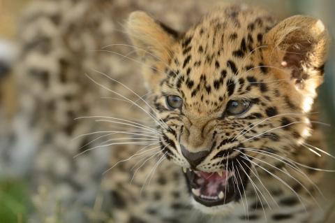 15 исчезающих видов животных, о которых мир стал забывать