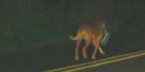 Нет, эта собака не украла ме…