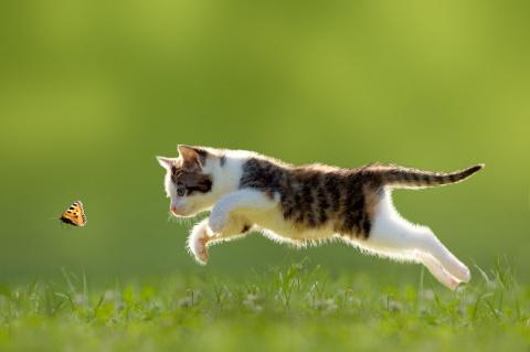 Коты и бабочки. Позитив :) это так мимими!