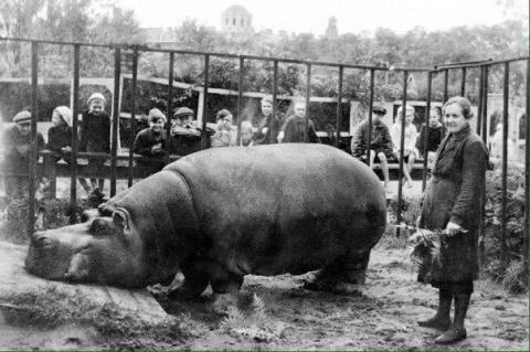 Неизвестные факты о блокадном зоопарке