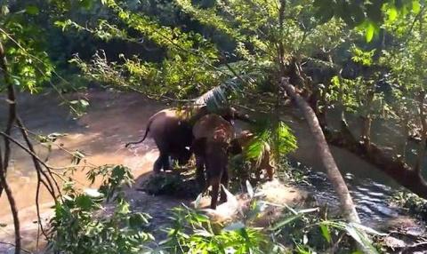 Семья слонов была так благодарна за спасение их детёныша, что стала махать спасателям хоботами