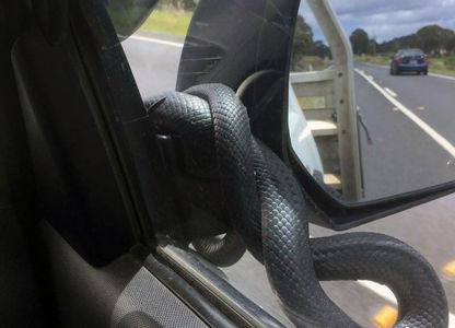 Леденящий душу взгляд: змея …