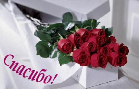 букет роз,спасибо