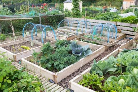 Как поддержать плодородие почвы после сбора урожая