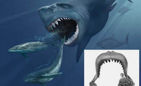Самые странные и пугающие акулы, открытые нами в морских глубинах