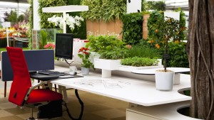 Растения в офисе способствую…