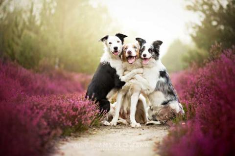 Вы видели счастливых собак? Эти фотографии заряжены добротой!