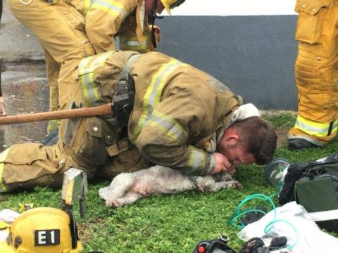 Пожарные спасли собаку, сдел…