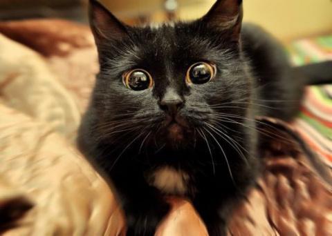 Оказалось, что коты тоже спо…